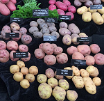 Potato Varieties
